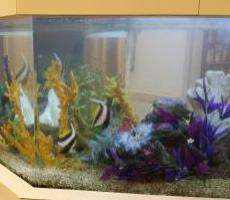 custom fish tanks Dayton OH