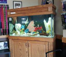 commercial fish tank aquarium maintenance dayton ohio