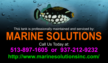 Aquarium Maintenance Service - Aquarium Maintenance - Custom